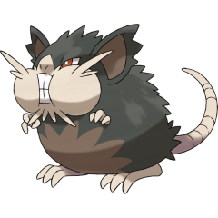 Alolan Raticate Pokemon Sun and Moon