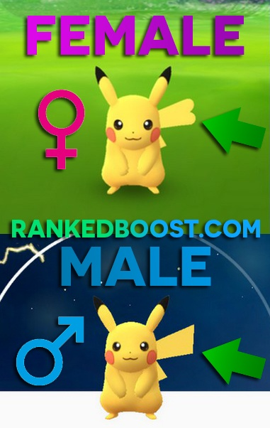 how to tell if pikachu is male or female